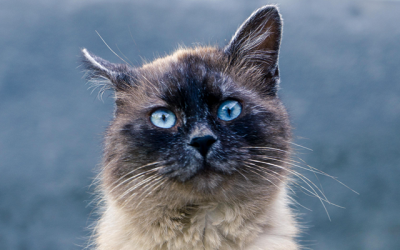 What to Do About Hairballs