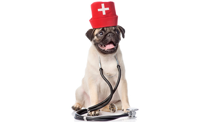 Newsflash: recall of common thyroid medication for dogs with low thyroid function (hypothyroid) – what do you recommend in lieu of thyroid medication?