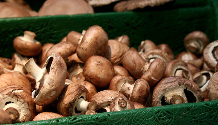 Special Ingredient Saturday – Mushrooms