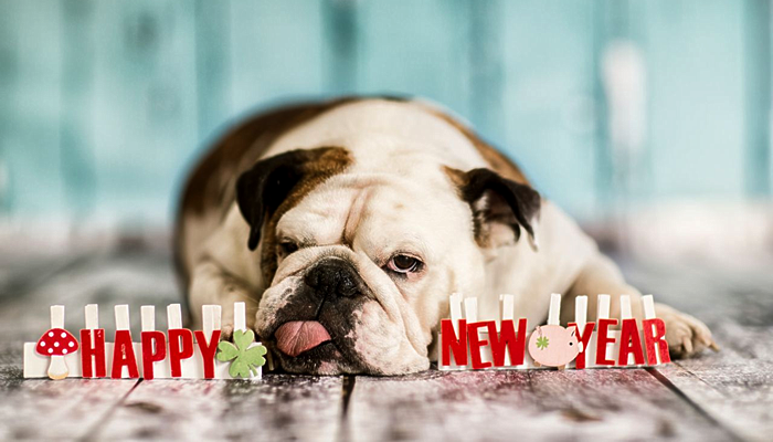 New Year's Resolutions for Your Pet Family