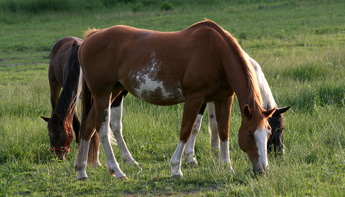 New Help for Horses with Wobbler's Syndrome