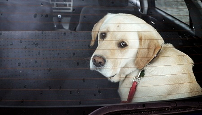 Help I Locked my Keys in the Car and my Dog is in There! What Do I Do?