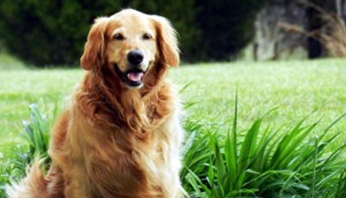 When Should I Seek a Second Opinion For my Pet?