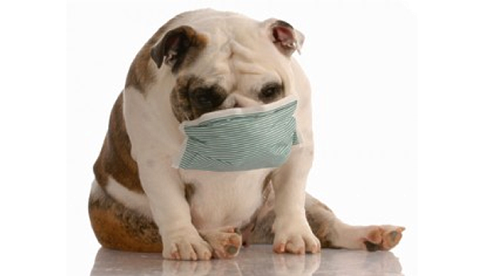 How Much Chance is There that my Dog will get Ebola Virus?