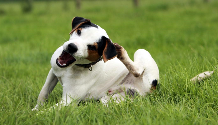 Why is my dog scratching so much – it drives us all crazy?!?