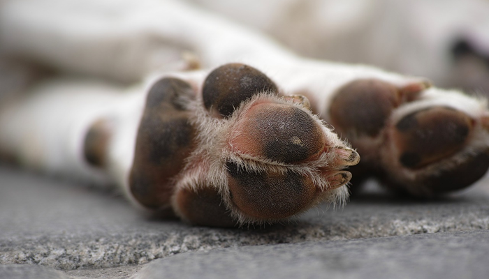 Are hot sidewalks dangerous for your pet or is that just a myth?